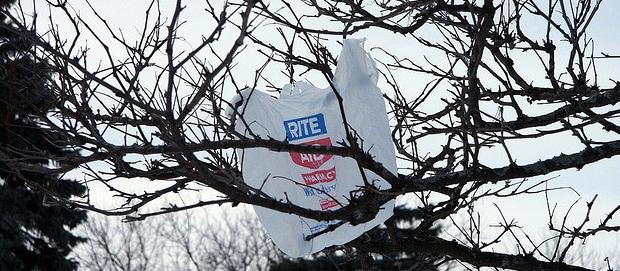 plasticbagintree L.A. County bans plastic bags